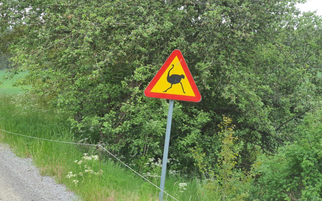Varning för…struts?!
